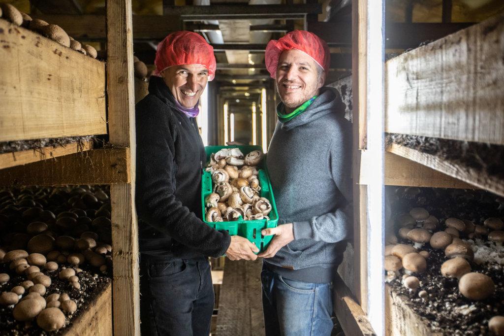 Preparing mushrooms