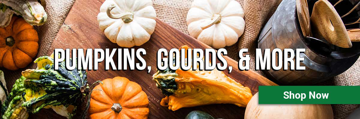 pumpkins, gourds, and more